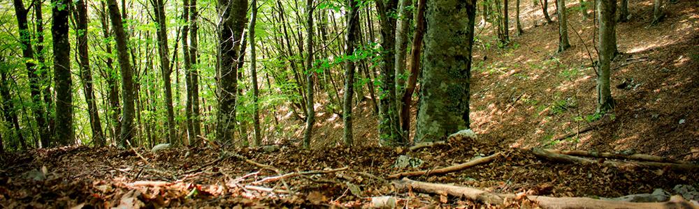 Trekking nella Foresta Umbra